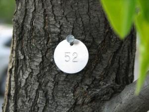 number 52
